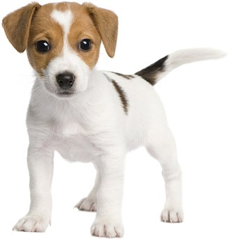 cute dog photo picture 8