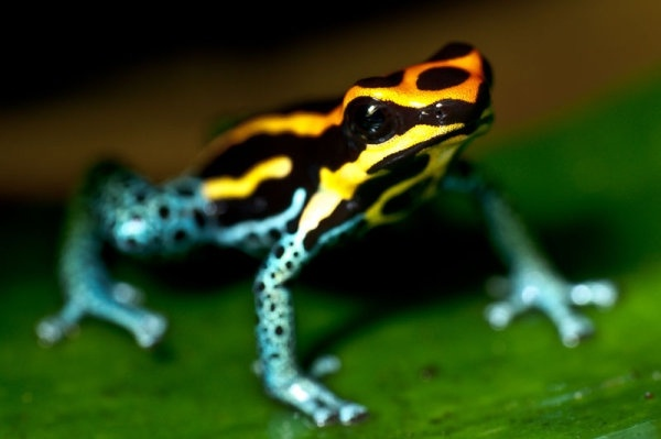 cute frog 03 hd pictures