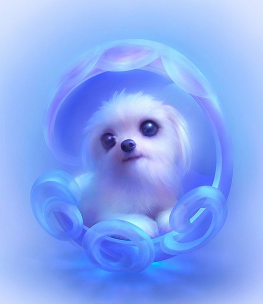 cute little dog definition picture