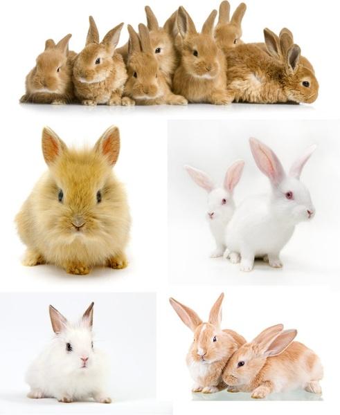 cute little rabbit hd picture