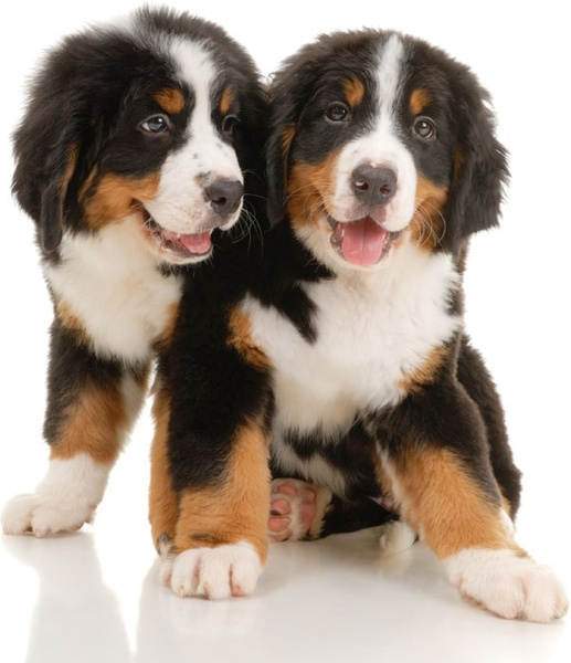 cute puppy 02 hq pictures
