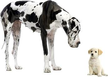 cute puppy dog u200bu200bpicture