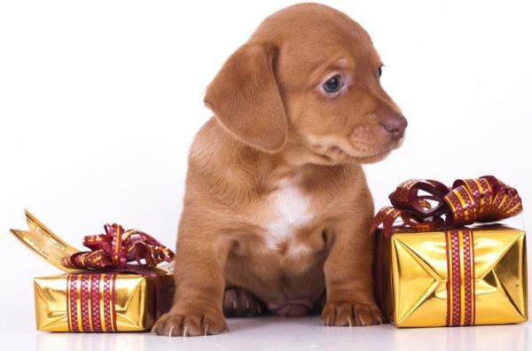 cute puppy hd picture