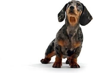 cute puppy photo picture 10
