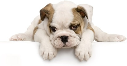 cute puppy photo picture 9