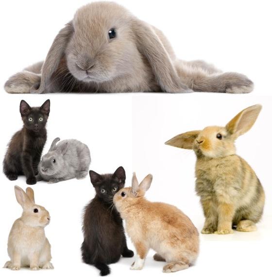 cute rabbit definition picture
