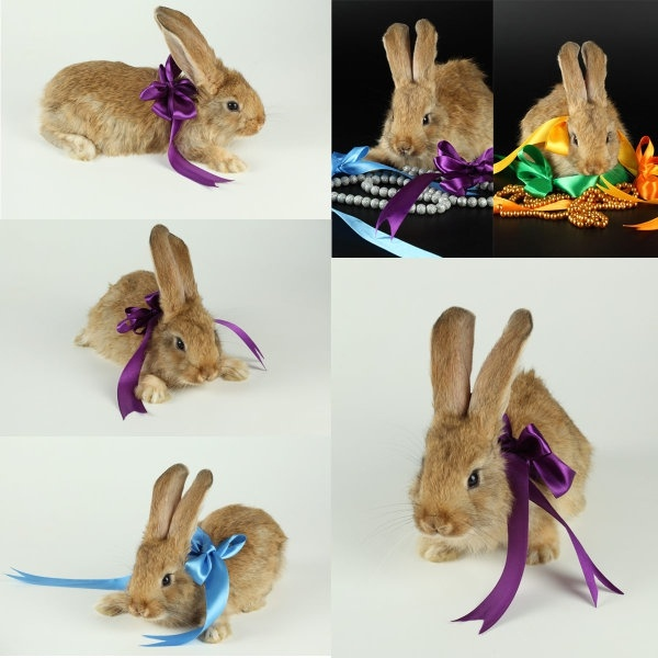 cute rabbit with ribbons highdefinition picture