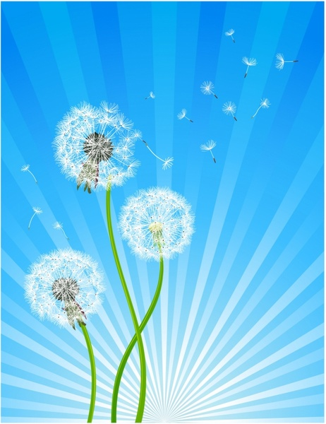 dandelion free vector download 94 free vector for