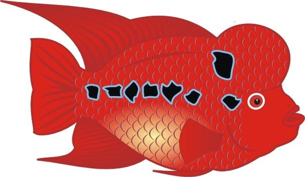 danz flowerhorn fish clip art free vector in open office drawing svg rh all free download com Jack Dempsey Fish Flowerhorn Fish Care