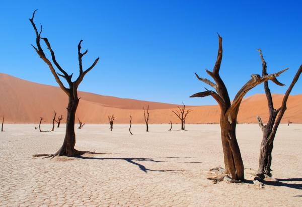 leafless dried tree on desert