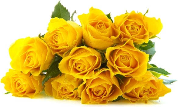 delicious yellow roses definition picture