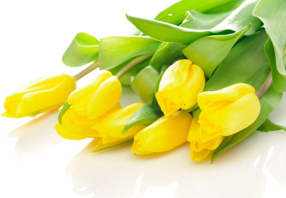 delicious yellow tulip 03 hd pictures
