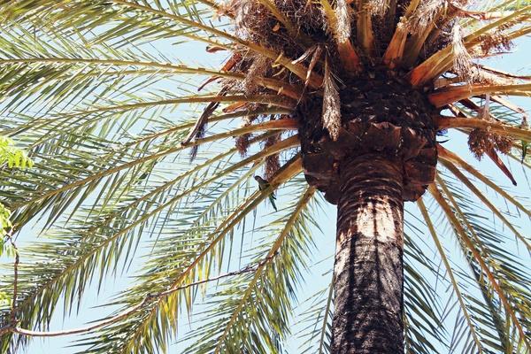 detail palms