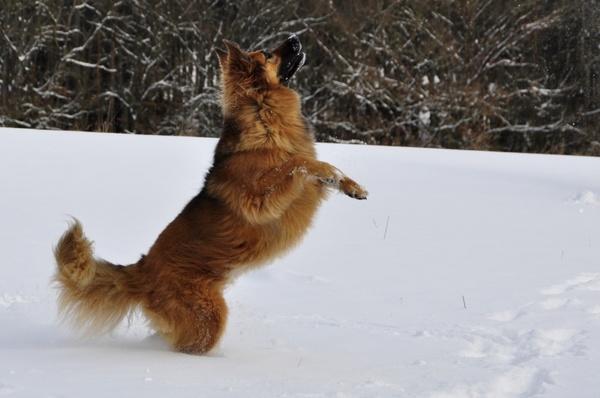 dog play jump