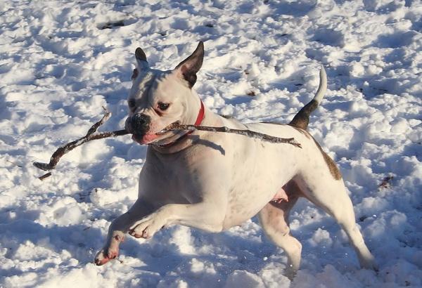 dog winter snow