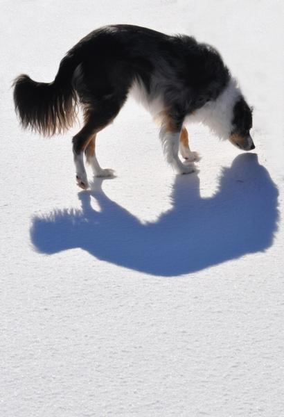 dogs shadow animal
