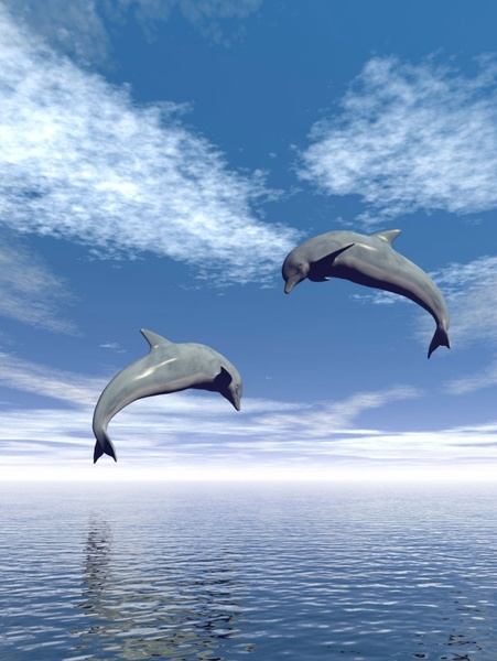 dolphins jumping 02 hq pictures