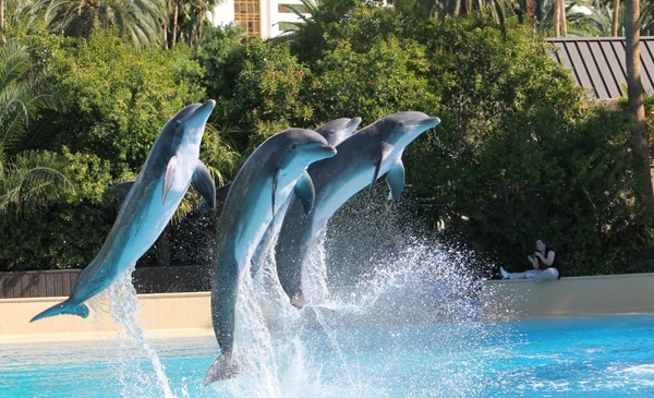dolphins show jumping