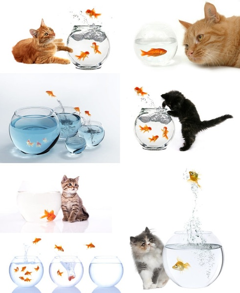 domestic cats and goldfish highdefinition picture