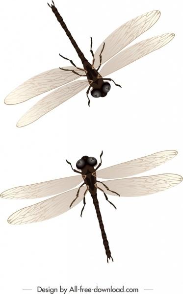 dragonflies background modern mockup design