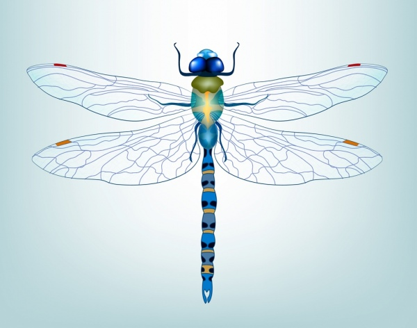 dragonfly icon 3d colored decor bottom view