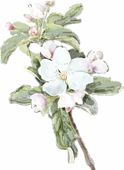 drawn watercolor flower art background vector set