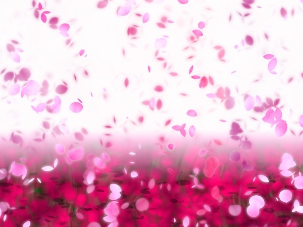 dream petals fluttered background highdefinition picture