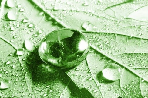 drops of water on the leaves