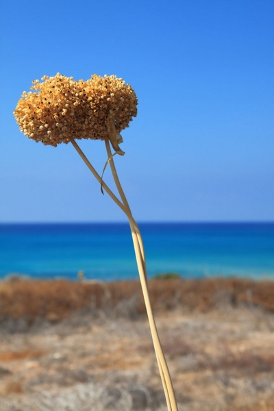 dry plant and blue sea