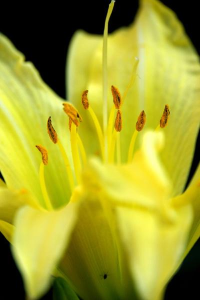 dsc03708 yellow beauty