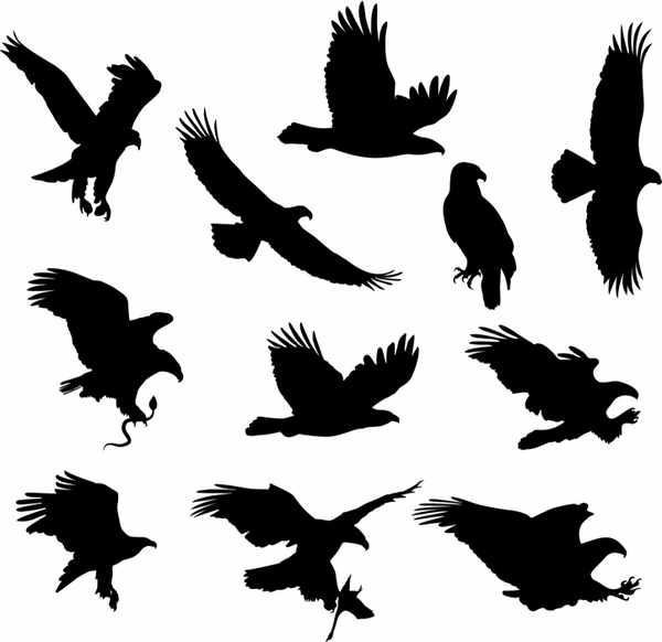 hawk free vector download  63 free vector  for commercial clipart eagle wings clipart eagle black and white