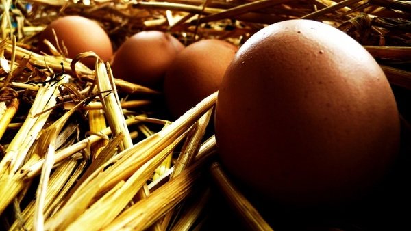 eggs and straw