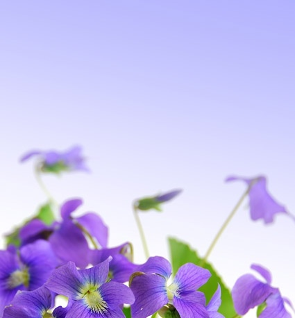 elegant purple flowers stock photo