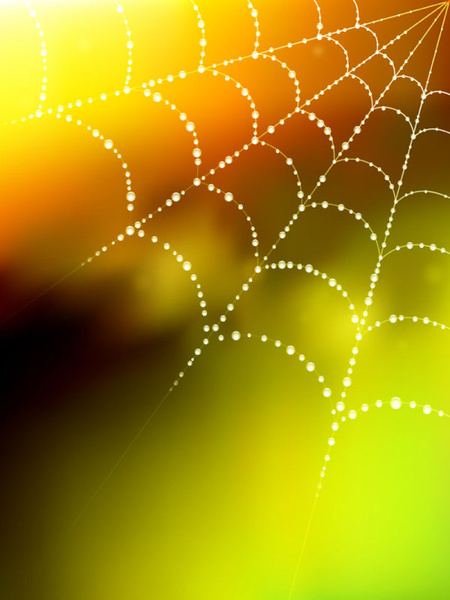 Spider Web Free Vector Download 4 917 Free Vector For