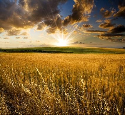 evening of farmland picture
