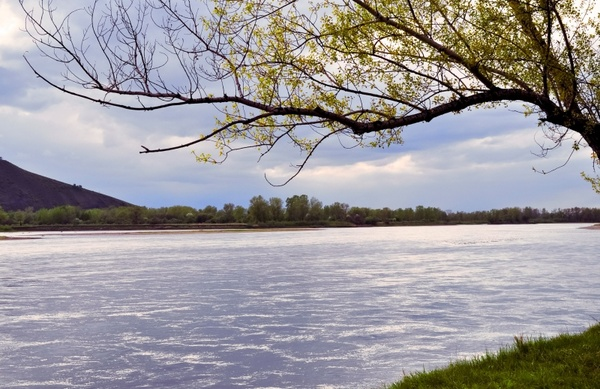 Digital Download Summer Tree Near the River