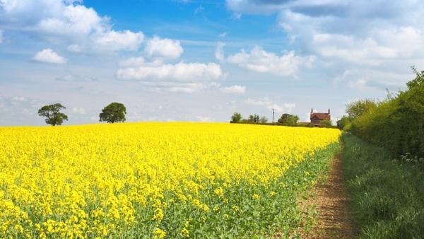 farm with field