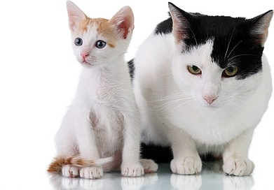 Fat Cats And Thin Cats Picture Free Stock Photos In Image Format Jpg Size 4368x2912 Format For Free Download 3 37mb