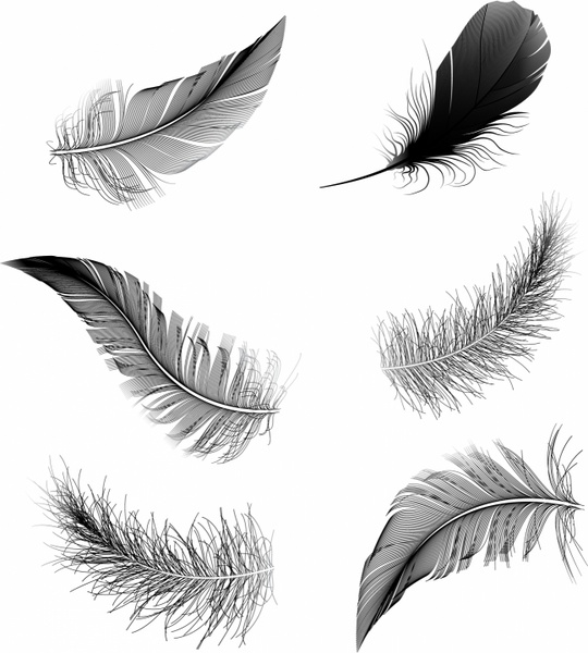 feather free vector download (349 free vector) for commercial use