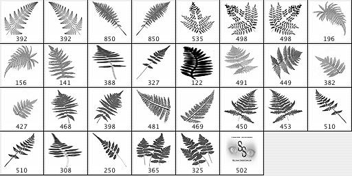 Ferns Brushes