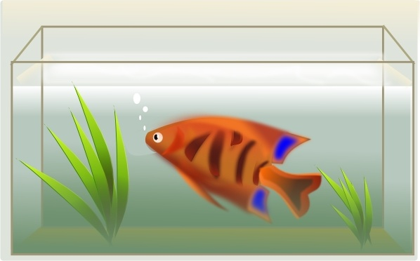 Fish Tank Clip Art Free Vector In Open Office Drawing Svg Svg Vector Illustration Graphic Art Design Format Format For Free Download 162 42kb