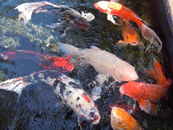 fish water fish swarm