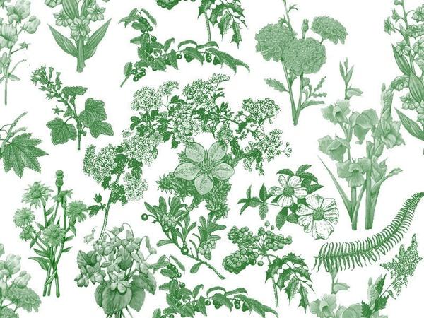 Flora Brushes 1