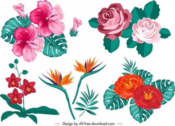 floral design elements colorful classical sketch