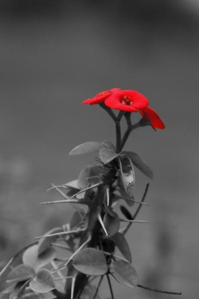 flower 192462