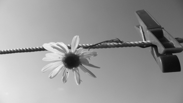 flower and clothespin