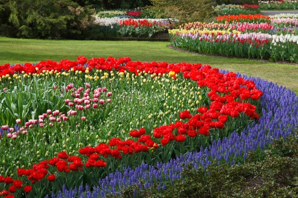 Garden flower wallpaper free stock photos download (13,302 ...