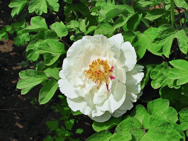 flower green leaves white flower