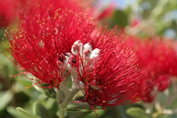 flower red flowers