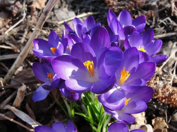 flower spring flowers purple